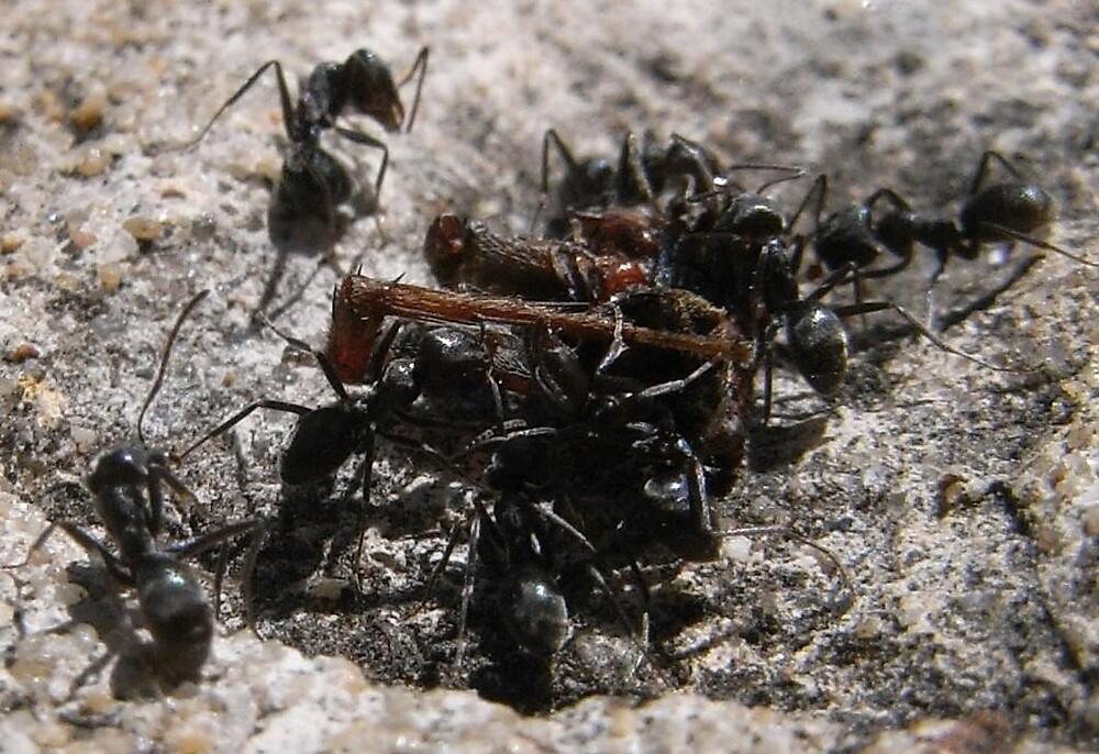 Ant Food by chookman
