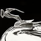 Flying Gazelle by dlhedberg