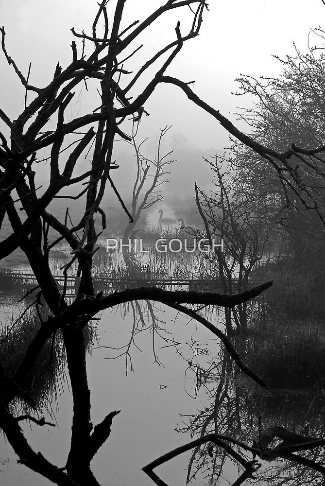 Hidden Beauty by PHIL GOUGH
