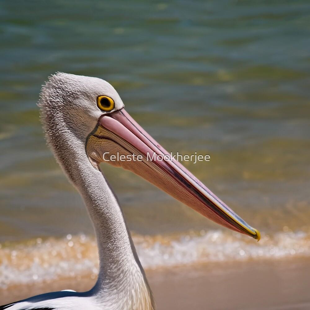 Aussie pelican profile by Celeste Mookherjee