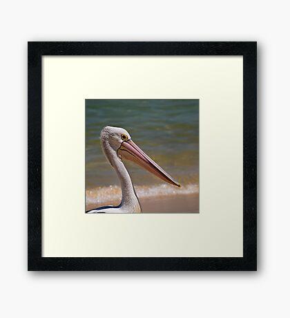 Aussie-Pelikanprofil Gerahmtes Wandbild