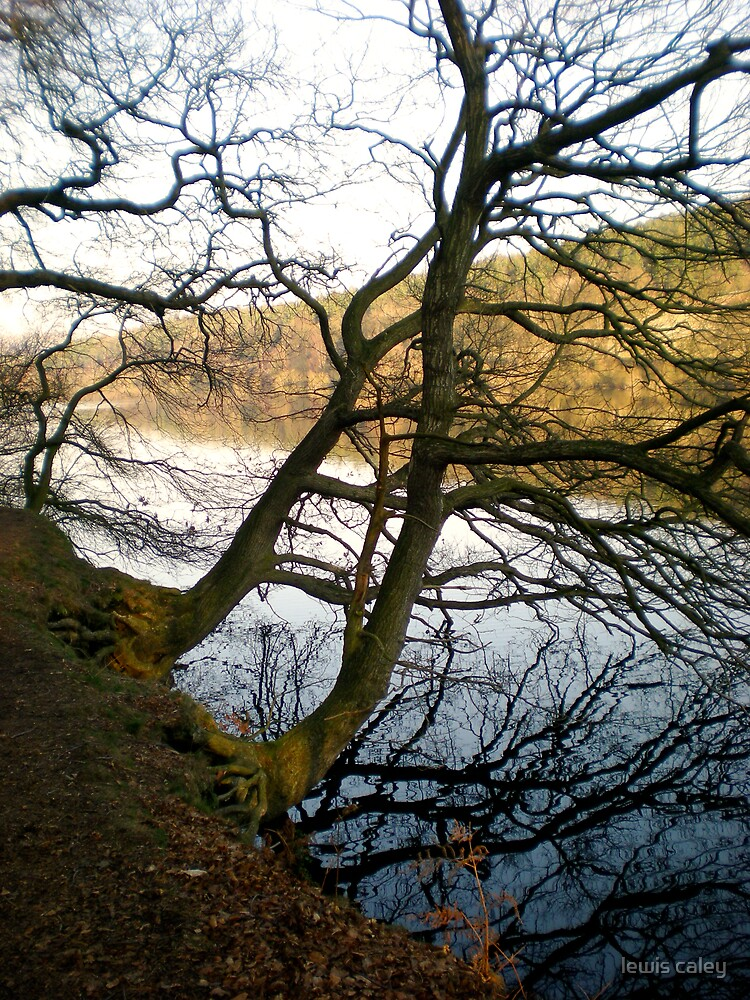 Trees over damflask reservoir by lewis caley