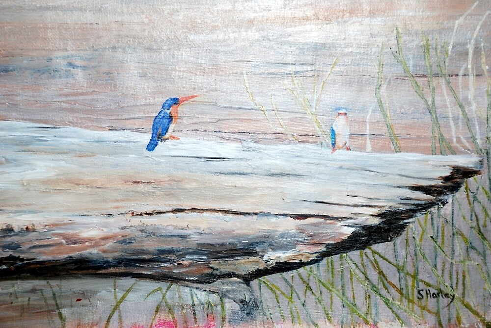 Malachite Kingfisher by Susan Harley