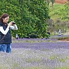 In The Lavender by Graeme  Hyde