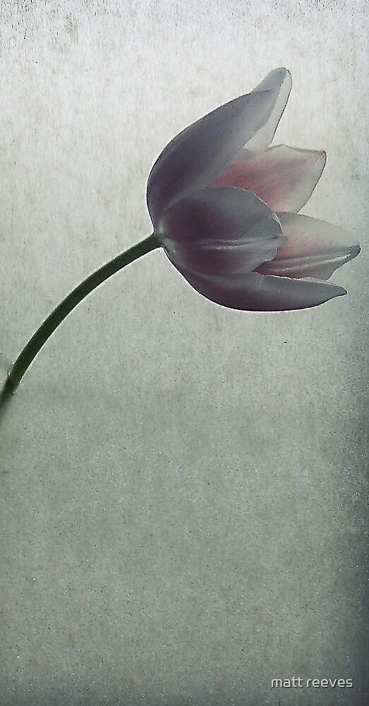 Tulip by matt reeves