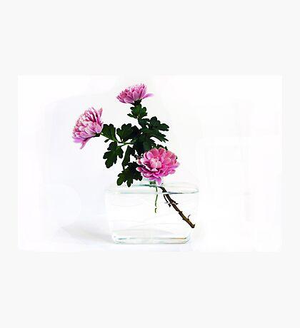 Unusual Reused Plastic Vase with Chrysanthemum Photographic Print