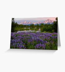 Field of Lupine and the Tetons Greeting Card