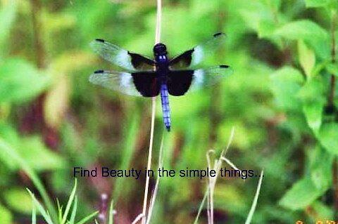 Blue dragonfly by DIANE KLEVECKA