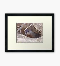 Mama Groundhog Framed Print