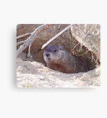 Mama Groundhog Canvas Print