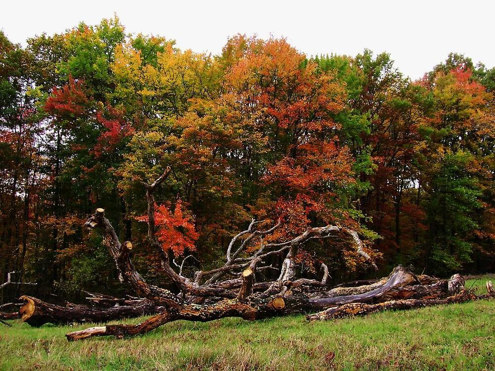Fallen trees by LARAMIE