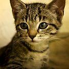 kitten by Victoria Fordham