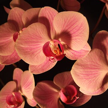 Cluster of Orchids by AliceOK