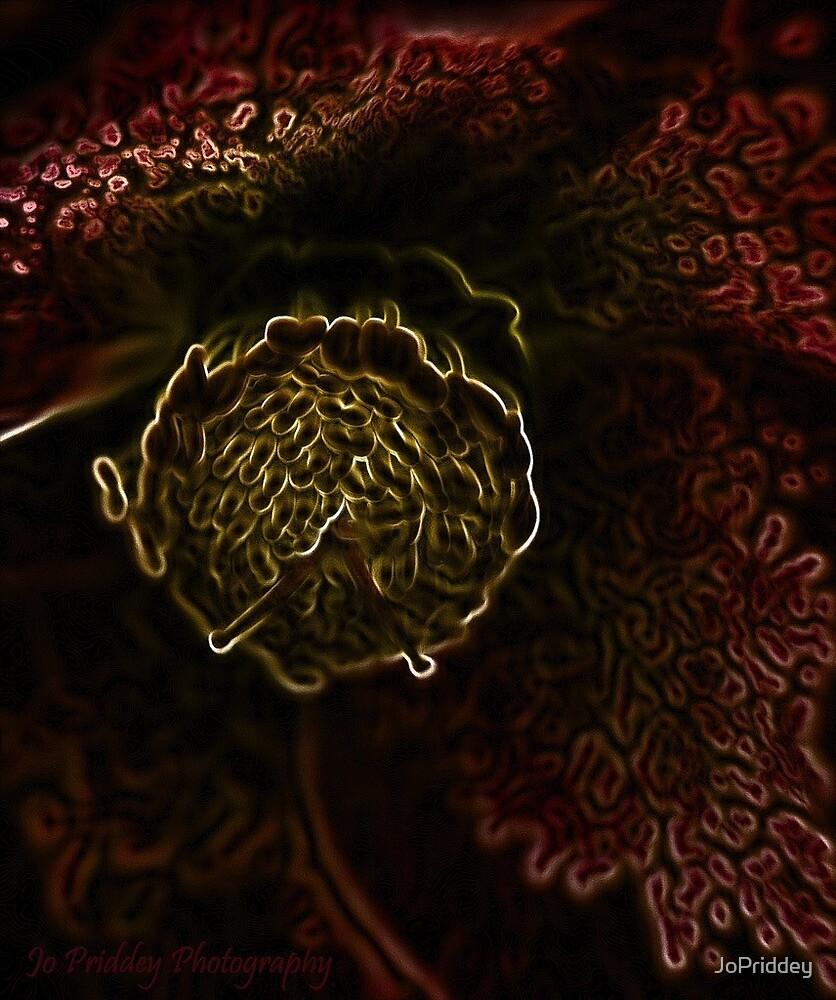 Winter flower by JoPriddey
