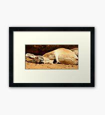 Sleepy Kangaroo Framed Print