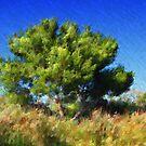 Maritime Pine by jean-louis bouzou