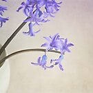 Blue- purple flowers in white china cup. by Lyn  Randle