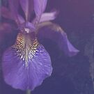 Blue Iris. by Lyn  Randle