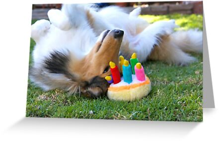 Happy Birthday Rough Collie by Jan  Wall