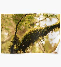 Moss covered branch Poster