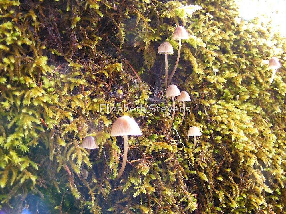 Wild Mushrooms by Elizabeth Stevens