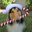 Christmas Collie, Rough Sable by Jan  Wall