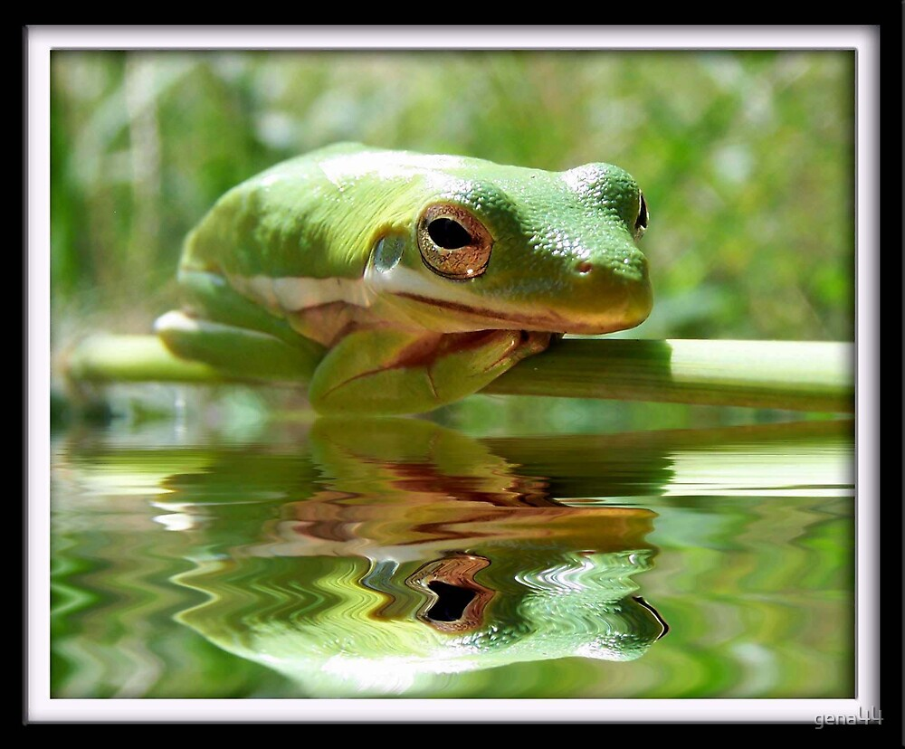 I am one good looking frog by gena44