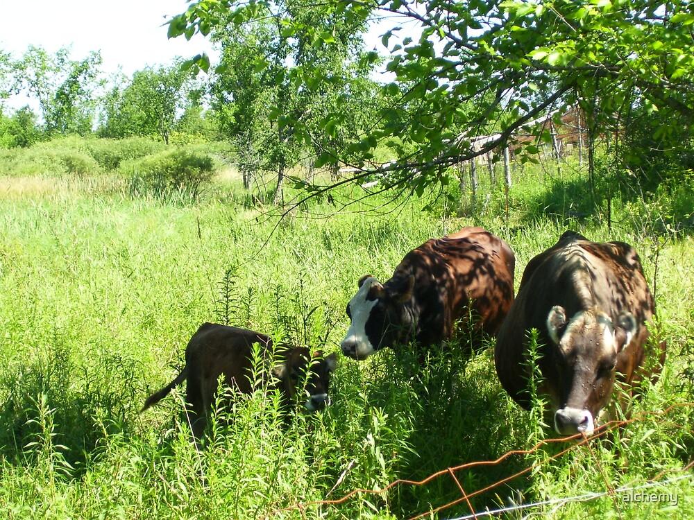 Cow Trio by alchemy