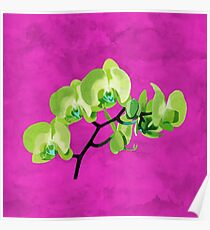 Orchid, green Poster