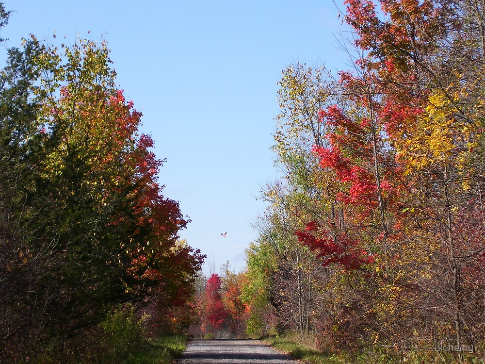 Country Road in the Fall by alchemy