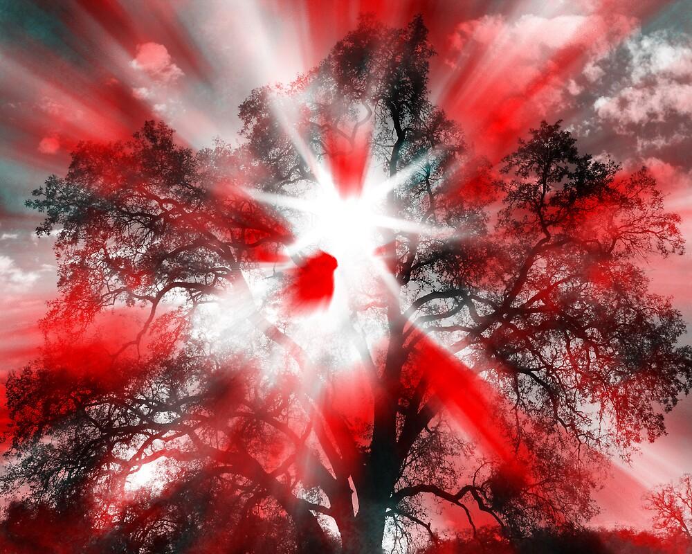 Crazy Tree by Andrew Santos-Johnson