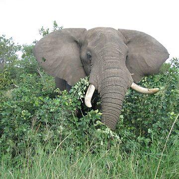 Elephant by shawnzahavi