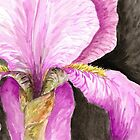 Purple Iris Watercolor by BeeGarland