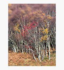 Highland Breeze Photographic Print