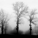 Lost in the Fog by David Lamb