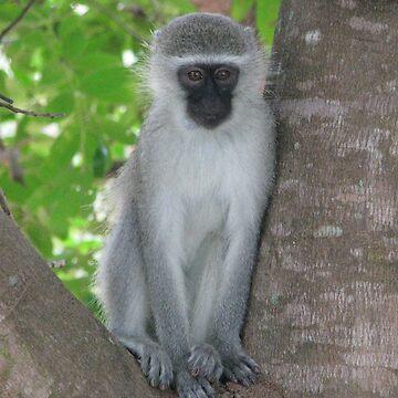 Monkey 2 by shawnzahavi