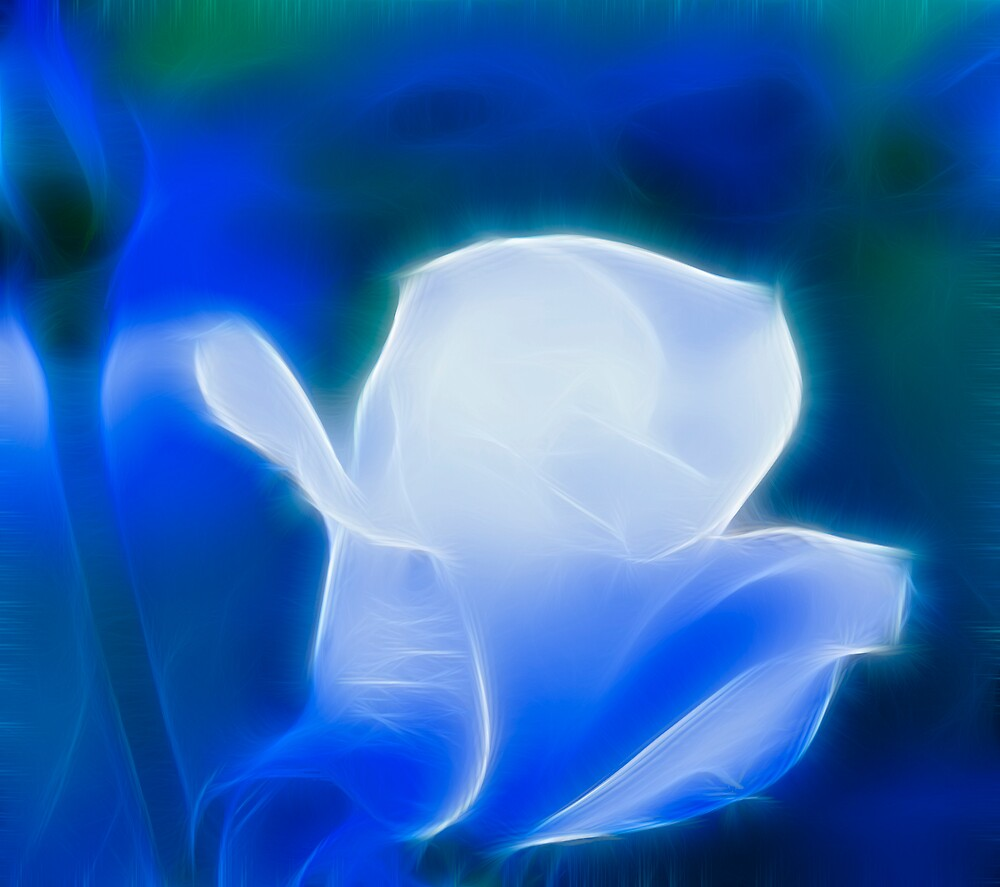 Electric Rose by Sue Martin