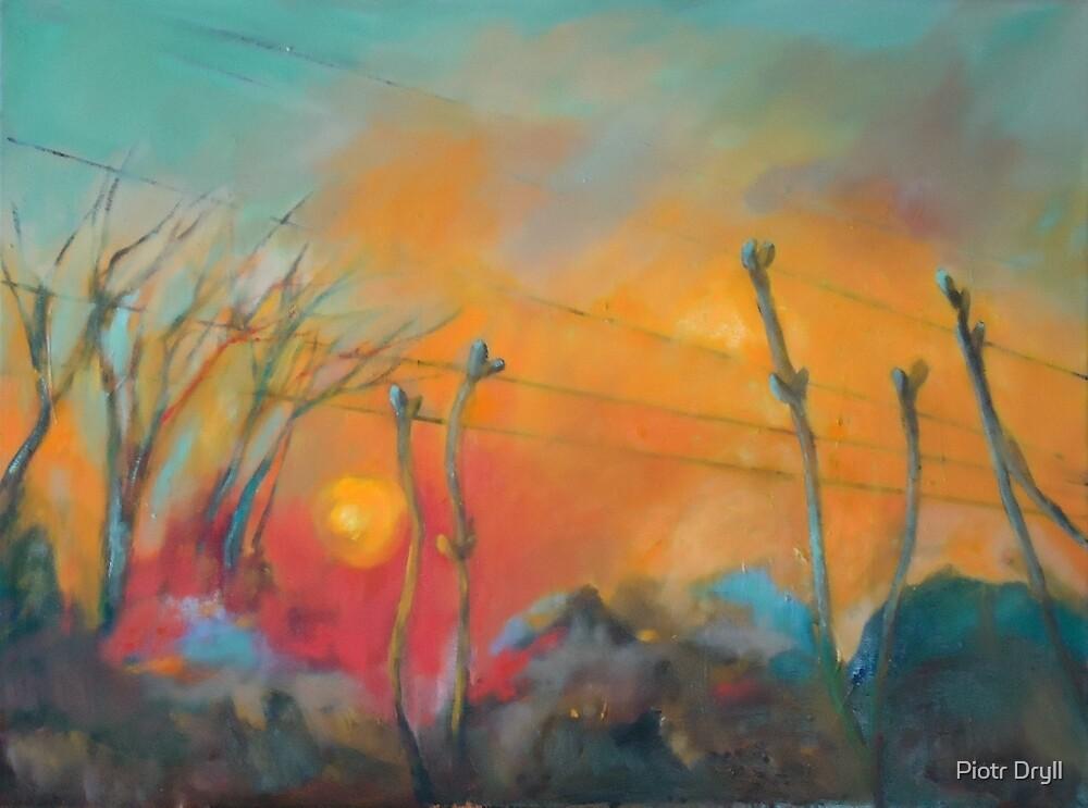 z okna by Piotr Dryll