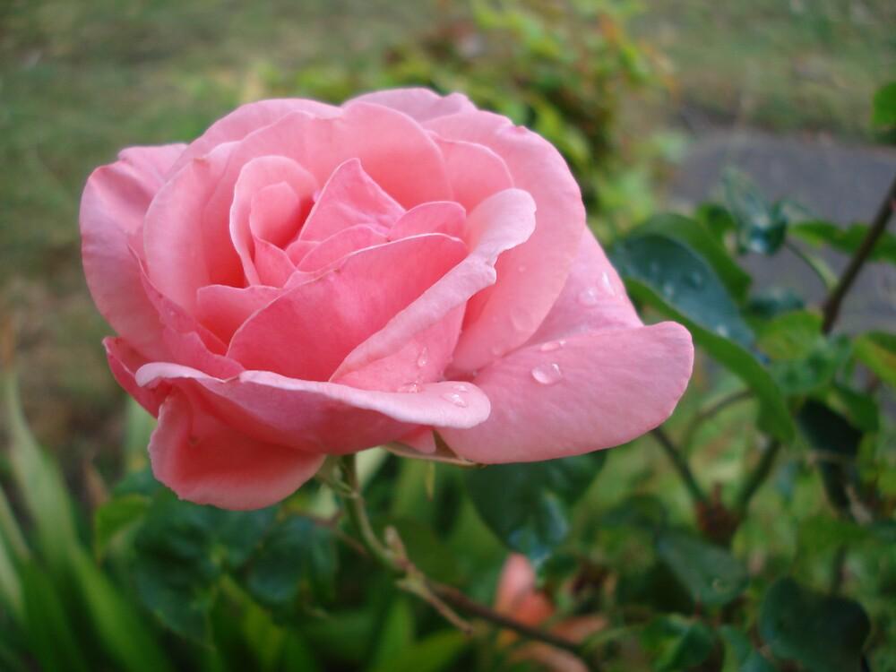 fragile flower by kveta