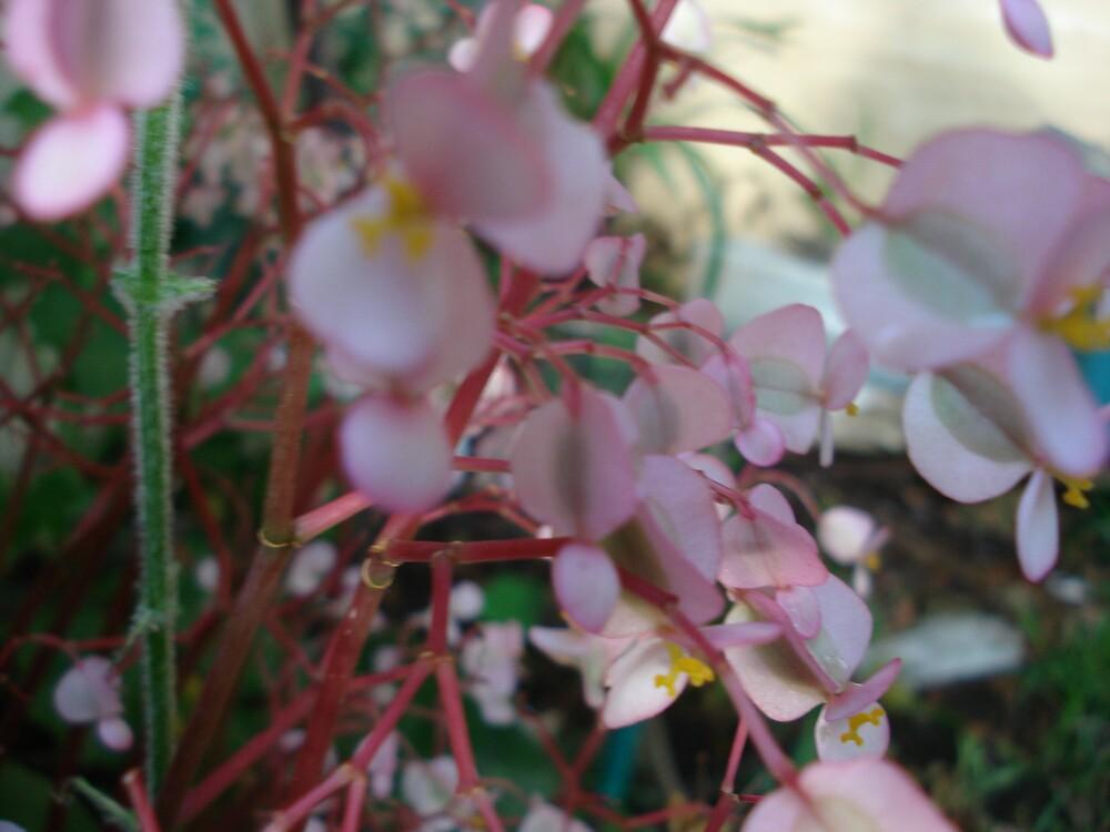 pale pink by kveta