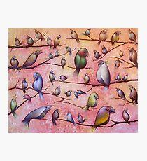 Bird Song Photographic Print