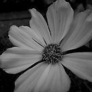White Flower in Black and White by Douglas E.  Welch