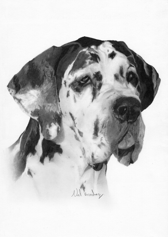 Great Dane by neilbrunton
