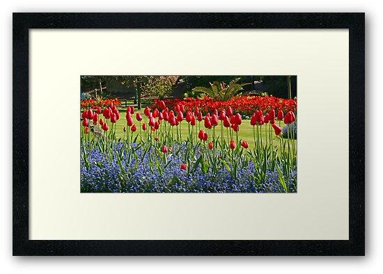 Tulip Mania by RedHillDigital