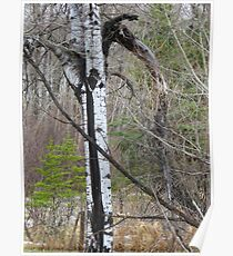Storm Wracked Tree Poster