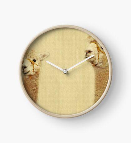 Porträt von zwei Alpakas Uhr