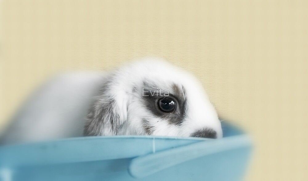 Baby Wabbit by Evita