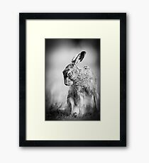 Dark Hare Framed Print