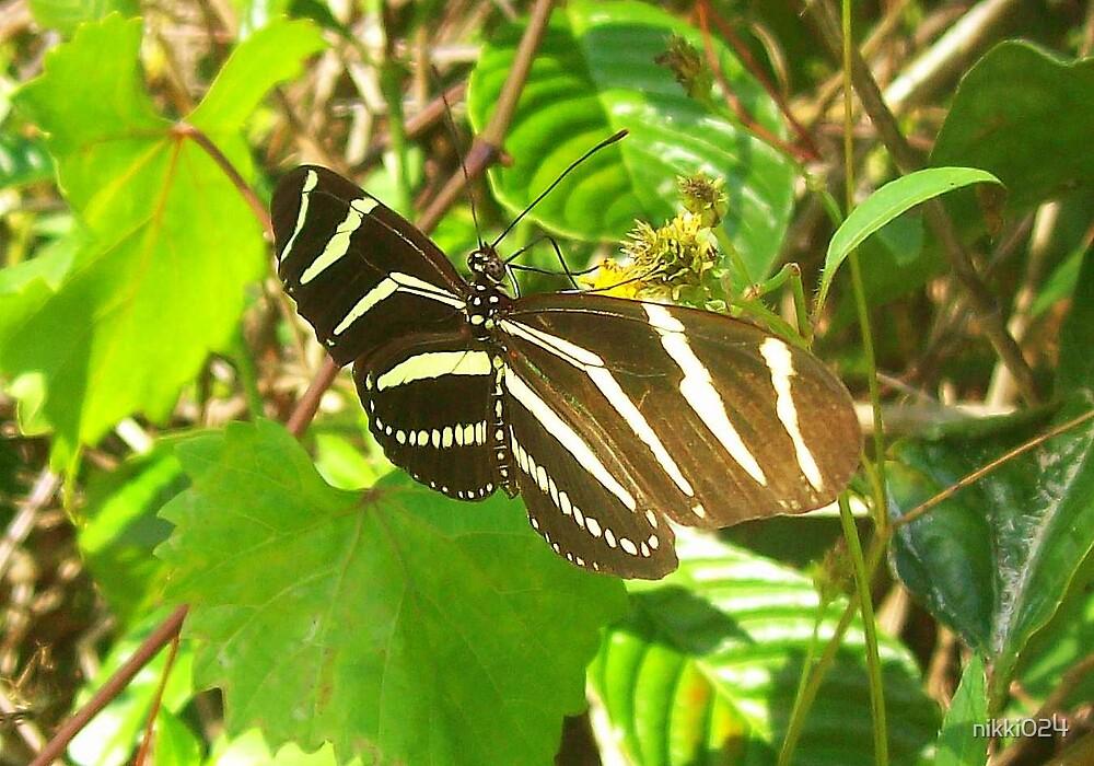 Zebra Flutter-By by nikki024