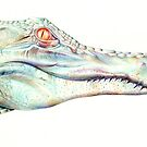 Albino Alligator by Brandon Keehner